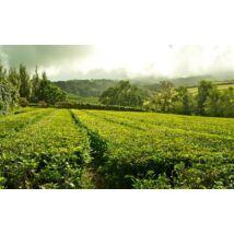 Azori tea 35g Lisbon Tea co.